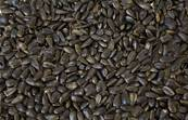 J&J Black Oil Sunflower Bird Seeds 6.4Kg