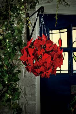 Gardman Artificial Festive Poinsettia Topiary Ball 26cm With Chain