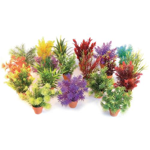 Rosewood Sydeco Assorted Coloured Potted Aquaplant - Small