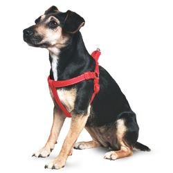Ancol Reflective Padded Dog Harness - Red