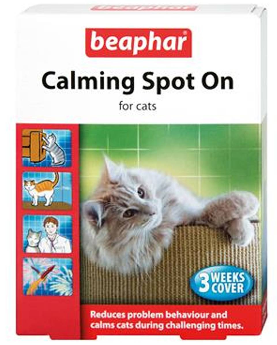 Cat Behaviour Problems Excessive Meowing
