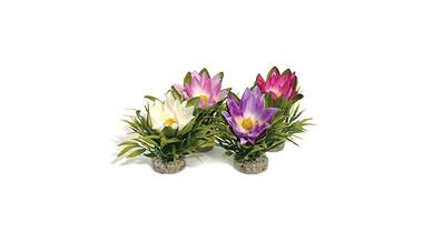 Sydeco Lotus Flower Aquarium Plant - Single
