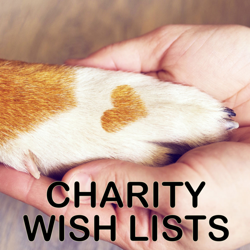 Pet Connection | Food, Supplies | Online | Pet Shop | Newry, NI