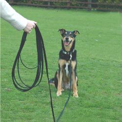 Clix Recall Training Long Line Dog Training Lead - 10m