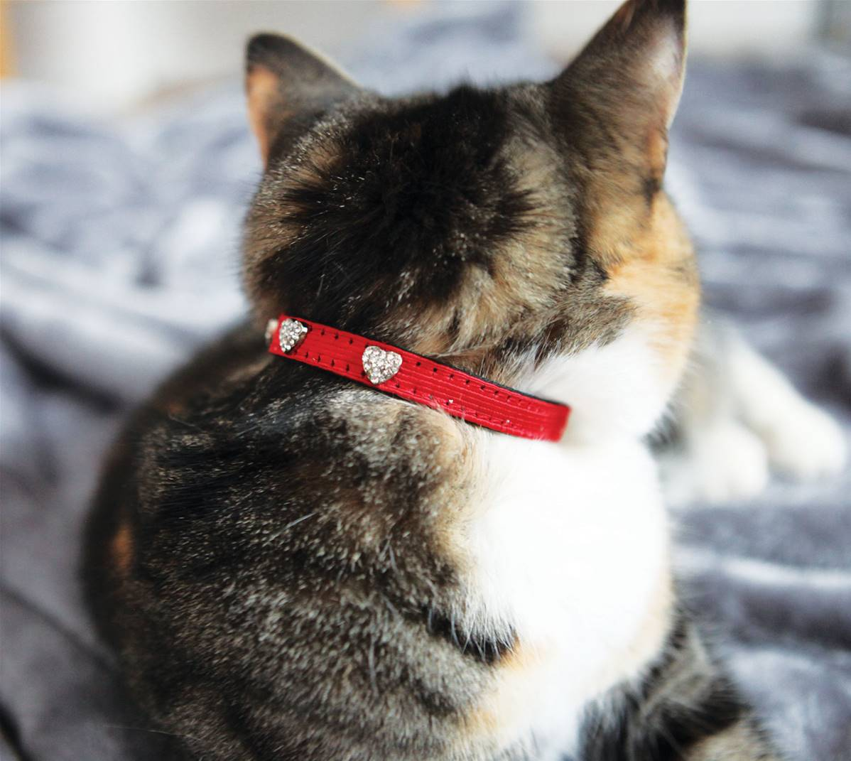 rosewood christmas cat collar with bell