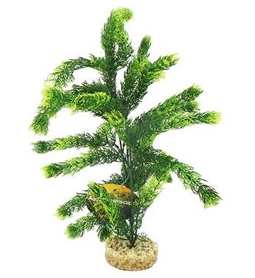 Cheeko Dreamcast Hornwort Tall 35cm
