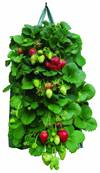 Gardman Hanging Strawberry Planter Twin Pack 19x35cm