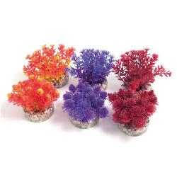 Rosewood Sydeco Assorted Coloured Aquaplant - Nano Bush