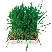 Trixie Small Animal Grass Dish Bowl 100g